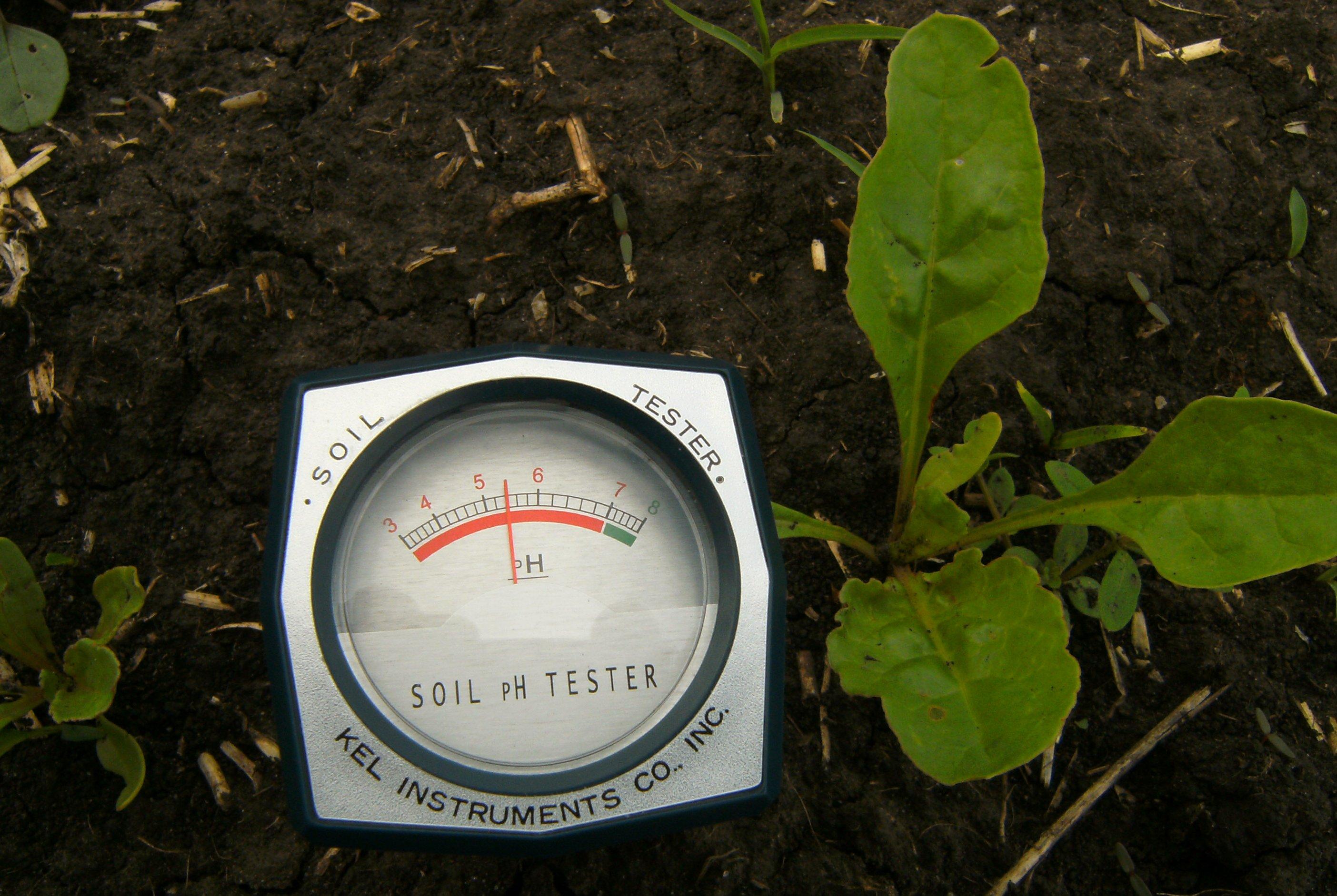 Измерение кислотности почвы экспресс pH-метром.